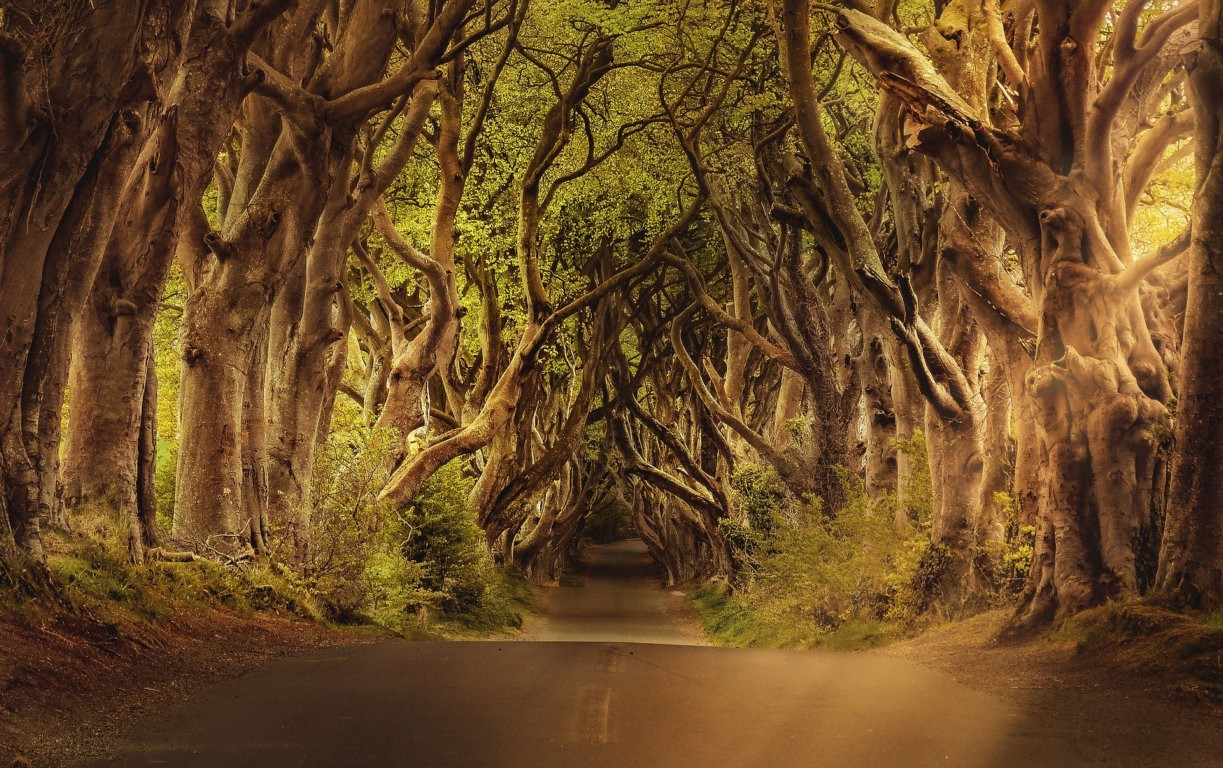 انتشار استون از طریق درختان و گیاهان