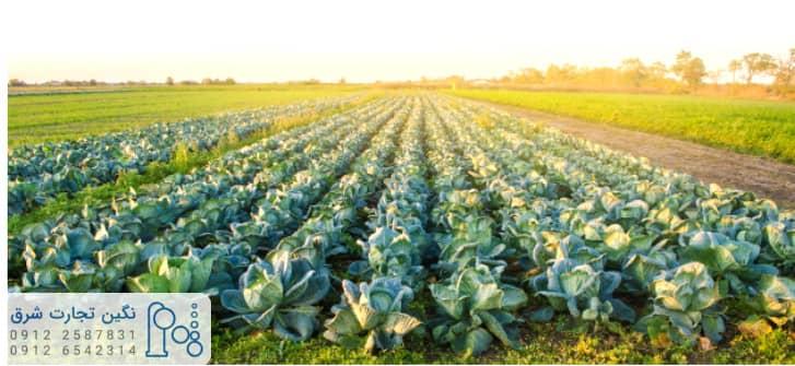 متیلن کلراید در محصولات کشاورزی